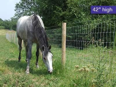 """Premium Horse Fencing 42"""" high"""